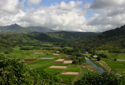 hanalei_view_tarot_fields