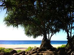 hanakapiai-beach